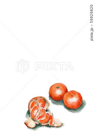 水彩で描いた温州みかんの年賀はがき 59929820