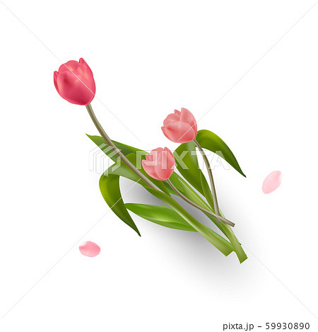 Beautiful Realistic Red and Pink Tulips flower placed on soft background with copy-space for lettering. Creative and Clean design in EPS10 vector illustration. 59930890
