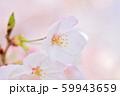 春の花 サクラ 59943659