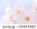 春の花 サクラ 59943663