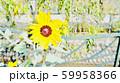 花 59958366