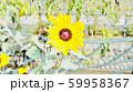 花 59958367