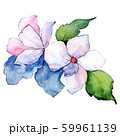 White flower. Isolated flower illustration element. Background illustration set. Watercolour drawing 59961139