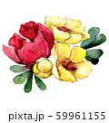 Red and yellow flowers. Isolated flower illustration element. Background set. Watercolour drawing 59961155