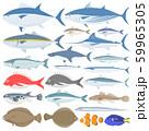海水魚のイラストセット 59965305