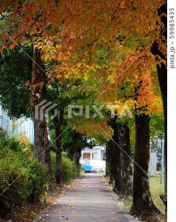 秋の並木道 59985435