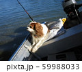 傾くボートに揺られ気持ちよさそうに黄昏ている犬 59988033