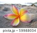 砂浜に落ちていたカラフルなプルメリア 59988034
