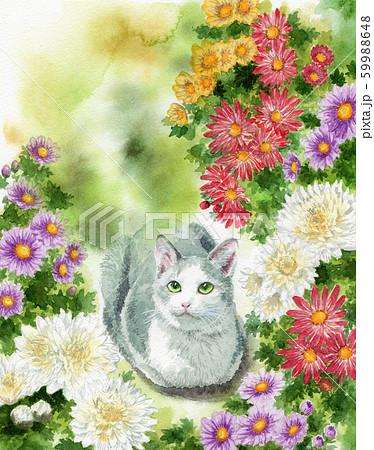 水彩で描いた猫と小菊 59988648