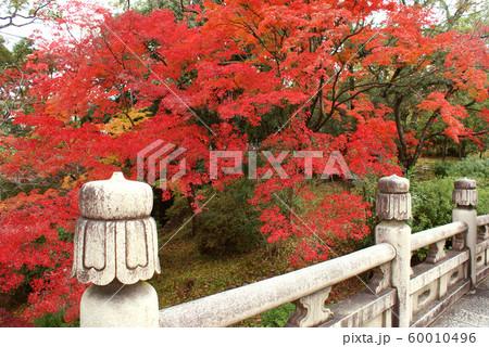 京都府京都市/大谷本廟 60010496