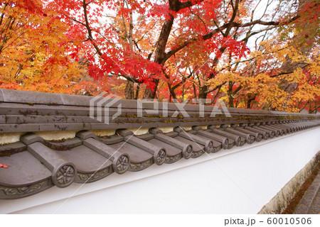 京都府京都市/禅林寺(永観堂) 60010506
