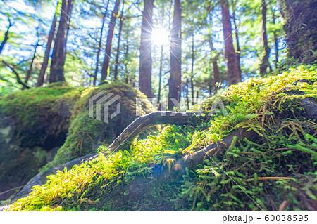 白駒の池 苔の森 【長野県】 60038595