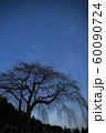 天の川と桜の木のシルエット 60090724