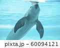 スナメリ 60094121