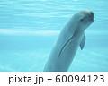 スナメリ 60094123