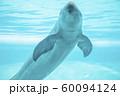 スナメリ 60094124