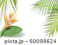 Tropical palm leaves on white background. Minimal 60098624