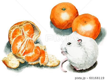 水彩で描いた温州みかんを食べる白ねずみ 60168119