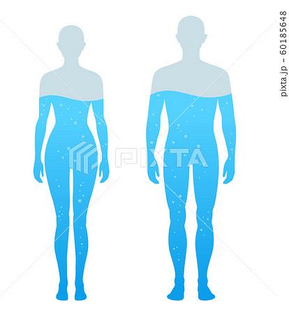 人体の水分割合の図 男女 60185648