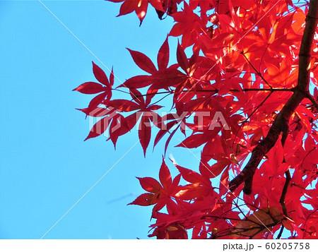 東京都大田区田園調布 宝来公園の紅葉 60205758