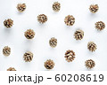 golden pine cone pattern background isolated on white for Christmas or winter seasonal 60208619