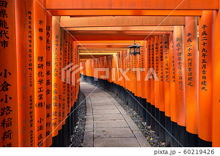 Torii path at Fushimi Inari Taisha Shrine in Kyoto, Japan 60219426