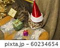 子猫 クリスマス 60234654