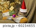 子猫 クリスマス 60234655