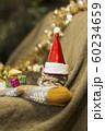 子猫 クリスマス 60234659