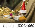 子猫 クリスマス 60234660