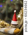 子猫 クリスマス 60234662