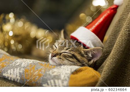 子猫 クリスマス 60234664