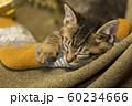 子猫 クリスマス 60234666
