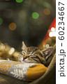 子猫 クリスマス 60234667