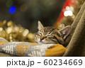 子猫 クリスマス 60234669