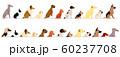 横向きの犬のボーダーセット 大型犬と小型犬 60237708
