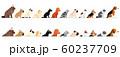 横向きの小型犬と猫のボーダーセット 60237709
