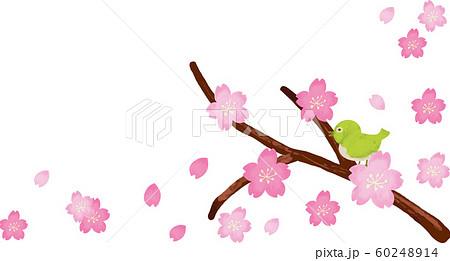 桜・メジロ 枝フレーム 60248914
