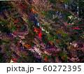 秋のドウダンツツジと竹林 60272395