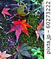苔の上の紅葉(雨上がりの落ち葉) 60273222