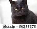 ワル顔の猫 60283675
