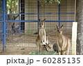 大牟田市 大牟田動物園 カンガルー、 60285135