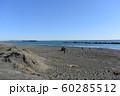 秋の湘南ひらつかビーチパーク  60285512