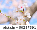 春の風景 桜の花 60287691