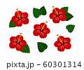 ハイビスカス 赤 ベクター 南国 セット 60301314