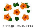 ハイビスカス オレンジ ベクター 南国 セット 60301443