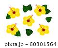 ハイビスカス 黄色 ベクター 南国 セット 60301564
