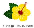 ハイビスカス 黄色 ベクター 南国 60301566