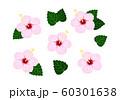 ハイビスカス 薄いピンク ベクター 南国 セット 60301638