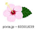 ハイビスカス 薄いピンク ベクター 南国 60301639